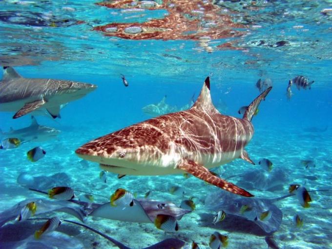 Как отпугивают акул