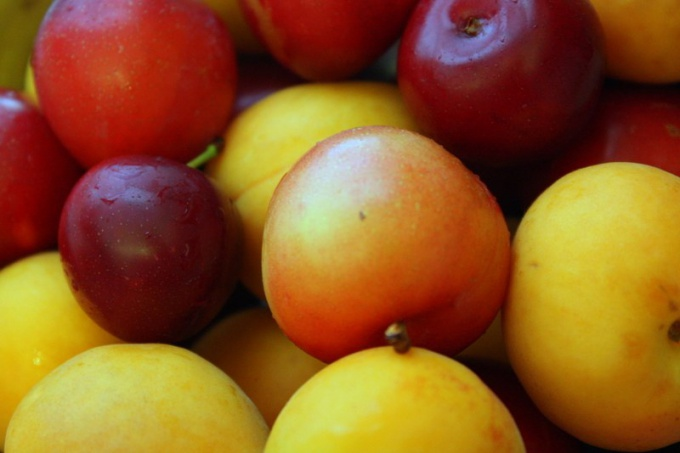 How to make a compote of apricots and plums
