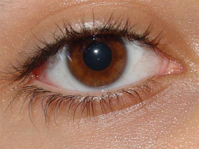 Чем человеческий глаз похож на принтер