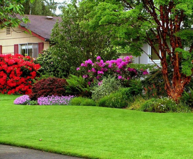 Как стричь газон летом