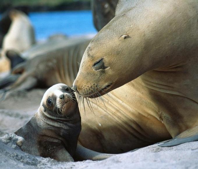 Как пополнился парк в Гонконге полярными животными