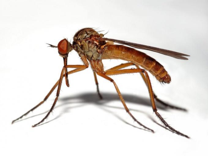 Как снять зуд отукуса комара