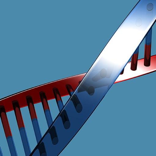 Что такое ген и геном