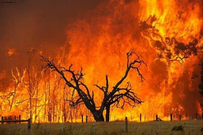 Как бороться с горящими лесами