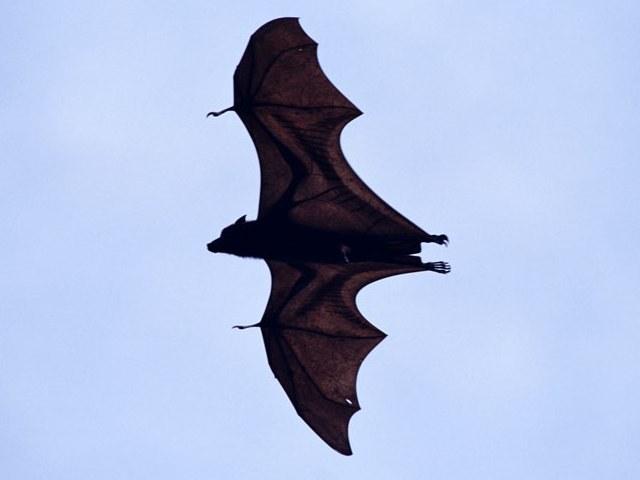 Как ученые вычислили скорость полета Бэтмена