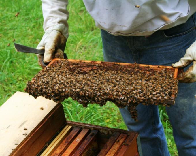 Как собирать мед