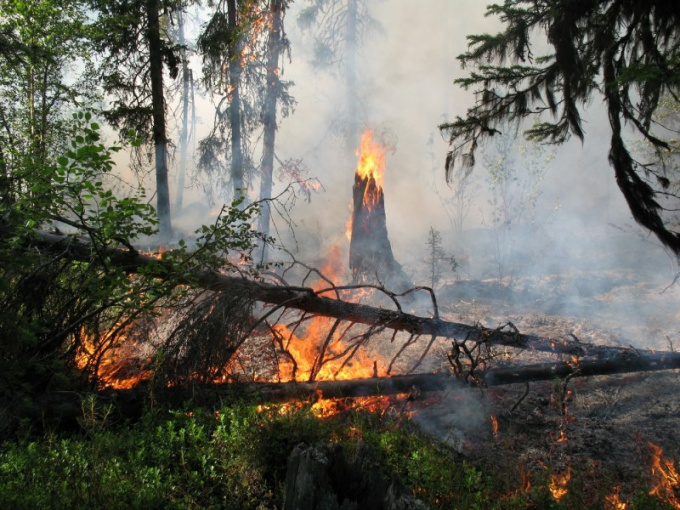 How to comply with fire safety in the woods