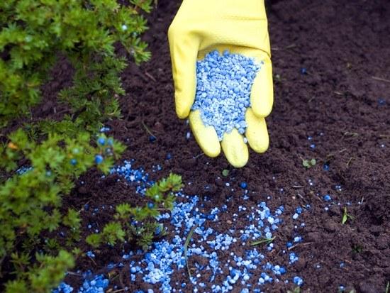 Как подкармливать растения в августе