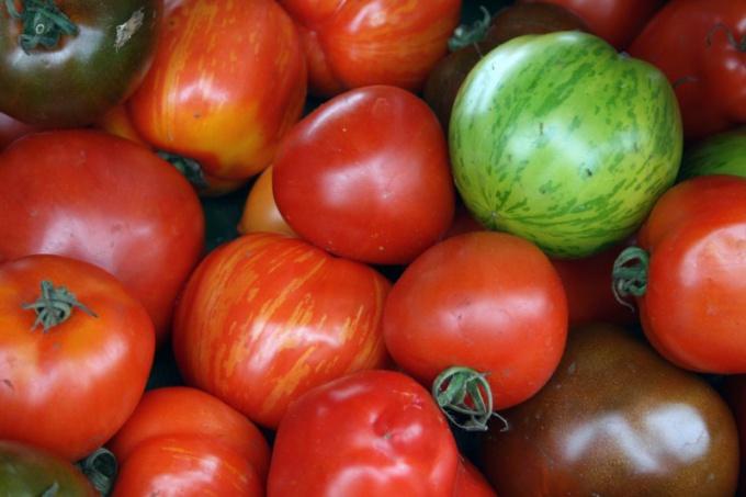 Комнатные сорта томатов: выращивание и уход