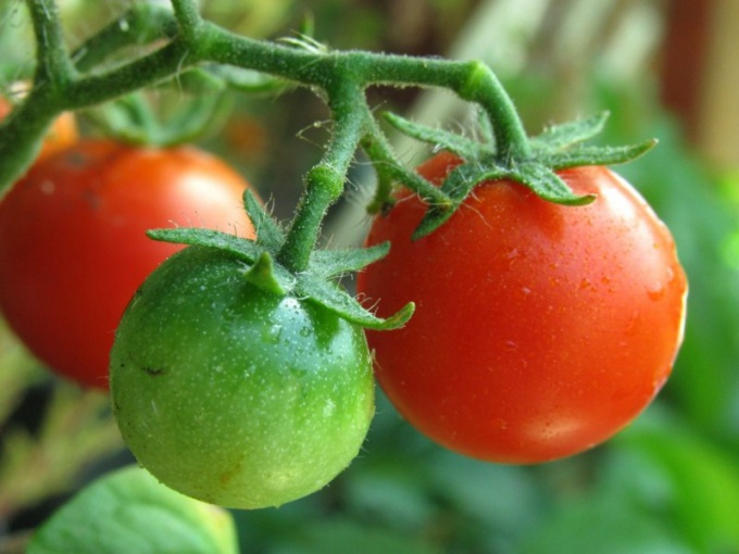 Why blackened green tomatoes
