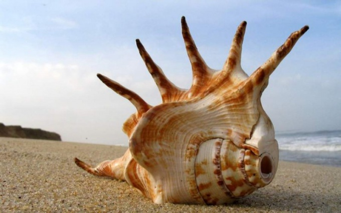 Why sea shell and hear the sound of the sea
