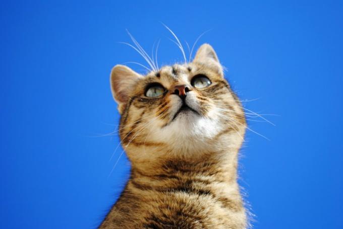«Кошка Мира»