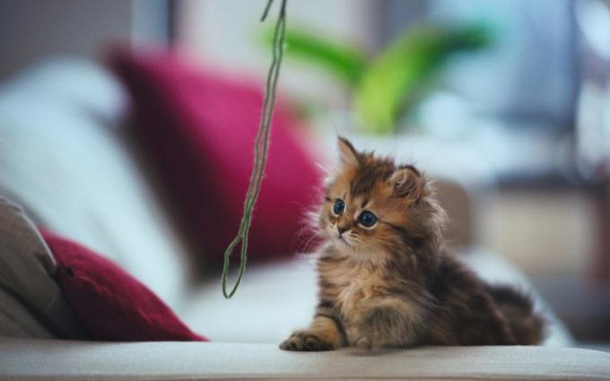 как сделать мышку для котёнка своими руками видео