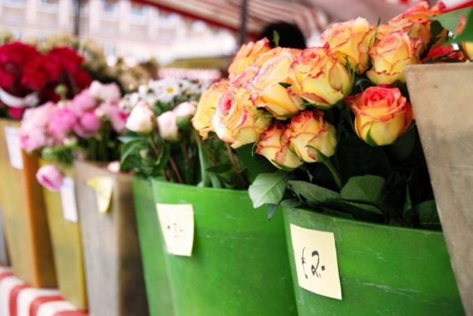 Как попасть на Летний садоводческий фестиваль в Риге