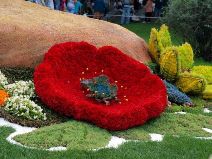 Как организовать выставку цветов