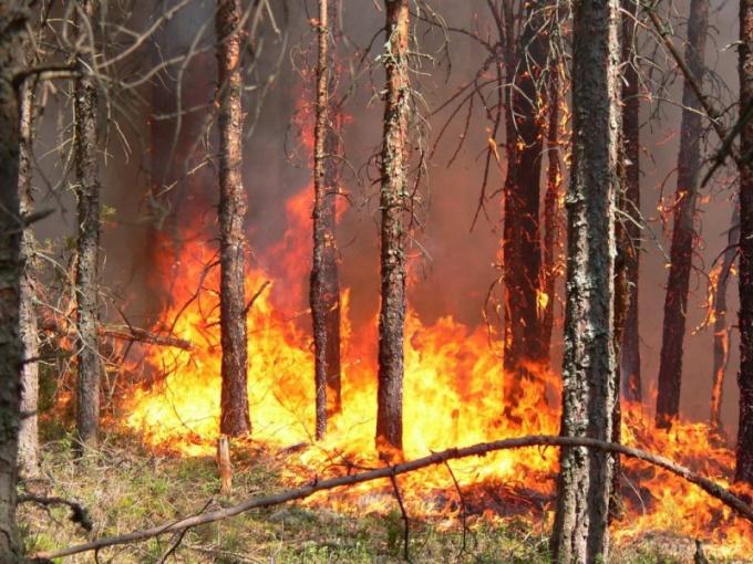 Как избежать возникновения лесного пожара