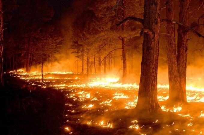 Чем опасны лесные пожары