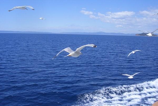 Как будут отмечать Всемирный день моря