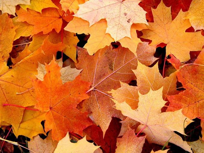 Как сохранить физическое здоровье осенью