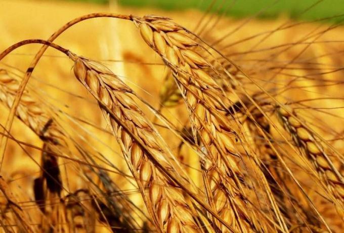 Как открыть интернет-магазин сельскохозяйственной продукции