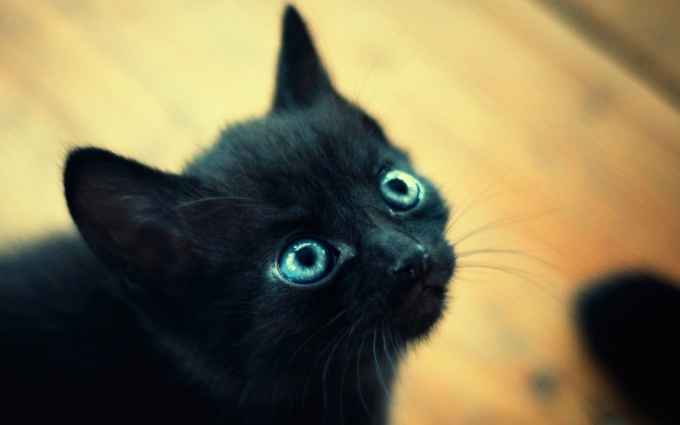 меняются ли глаза у котят