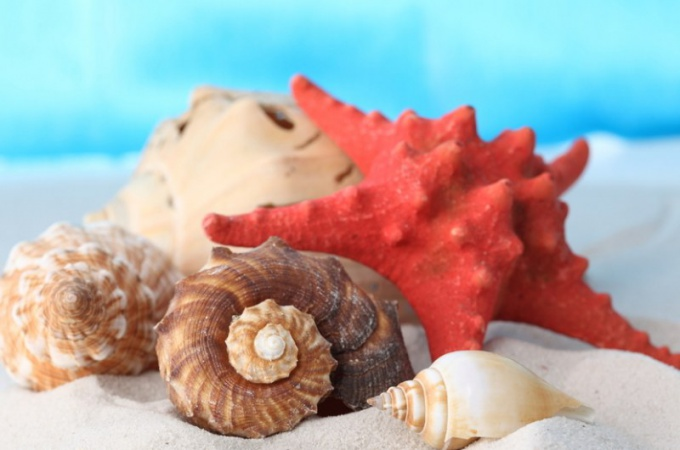 Why in the sea shell you can hear the waves