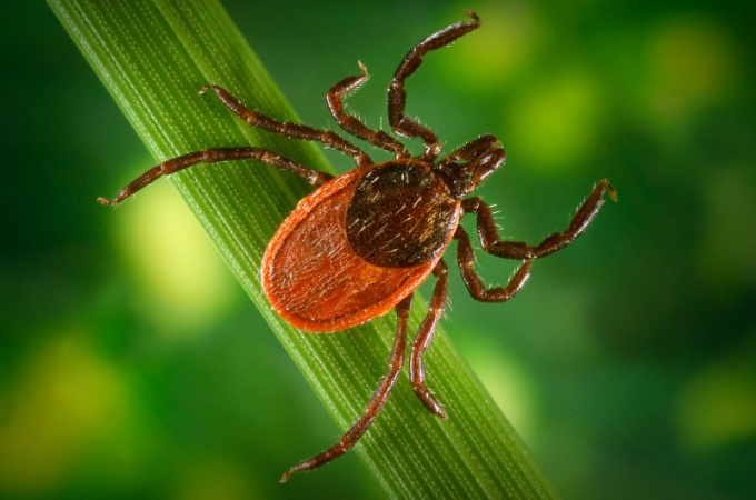 How to check whether the dangerous tick