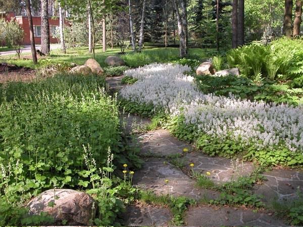 Что посадить в тенистом уголке сада