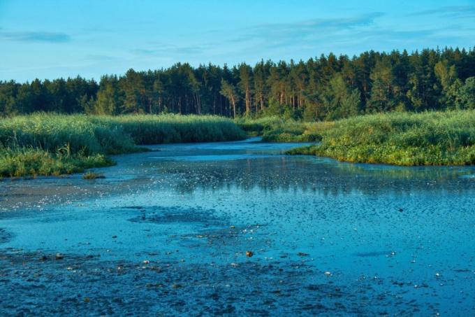 Каковы источники и виды загрязнения поверхностных вод суши