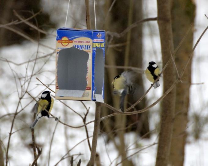 Как помочь птицам пережить холода: особенности кормления городских птиц