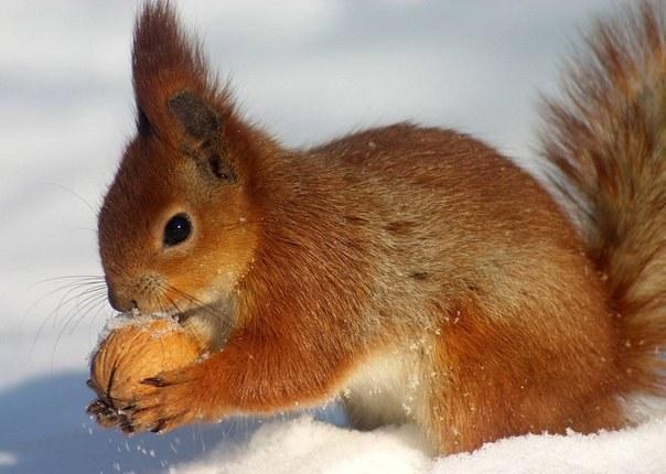 Картинки звери готовят запасы на зиму