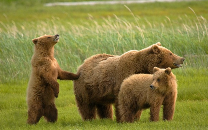 Как звери воспитывают своих детенышей