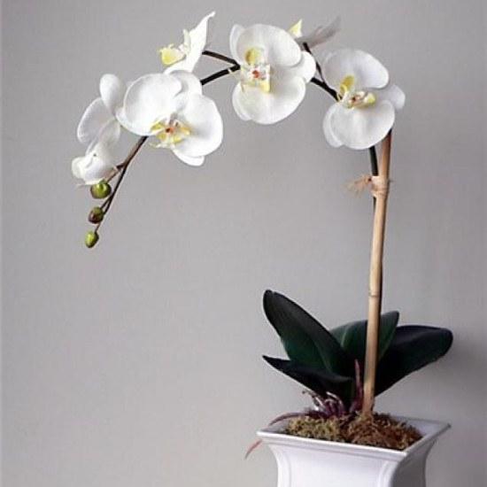 Как ухаживать за комнатной орхидеей?