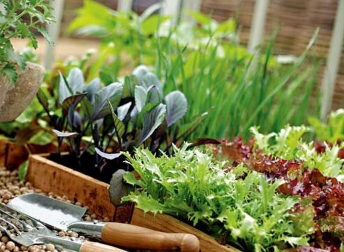Как защитить урожай