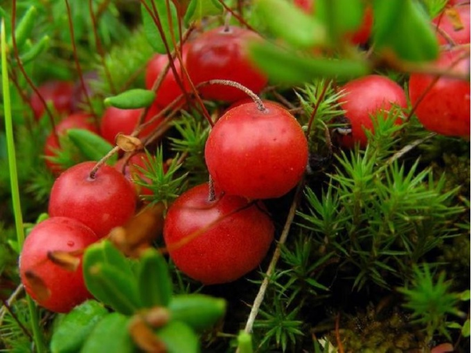 Useful properties of cranberries