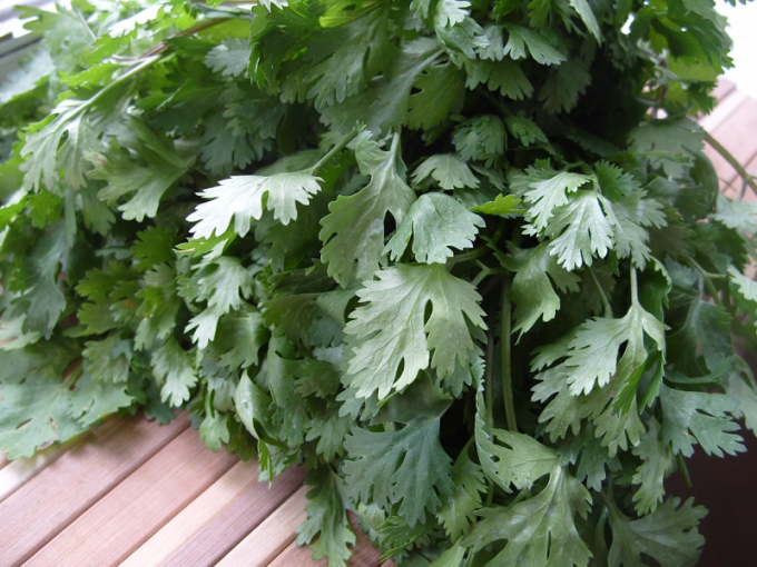 Recipes with cilantro