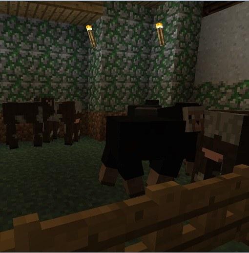 Ферма коров и овец