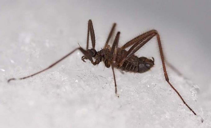 Многие насекомые зимой впадают в диапаузу
