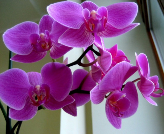 As in nature the orchids grow