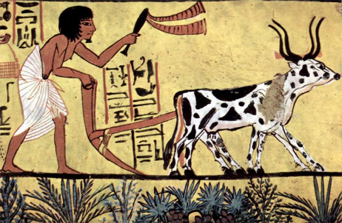 Как возникло земледелие