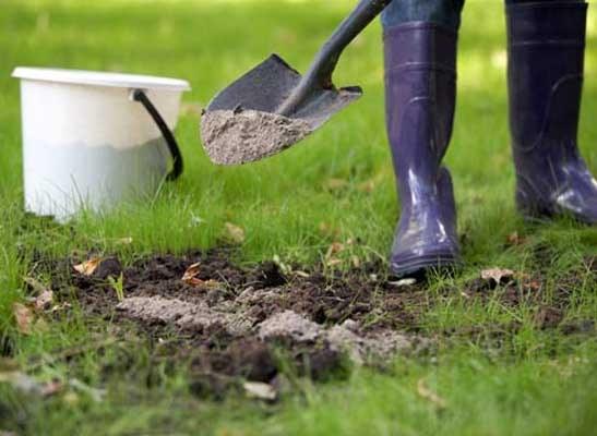 Как вносить в почву золу