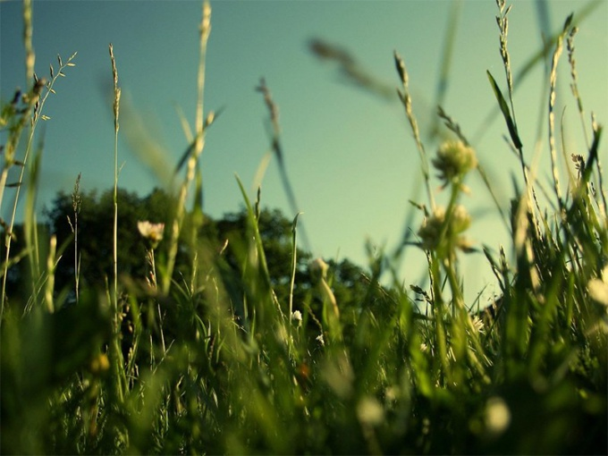 Как и чем питаются растения
