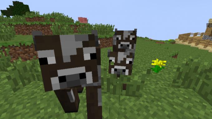 Небольшое стадо коров