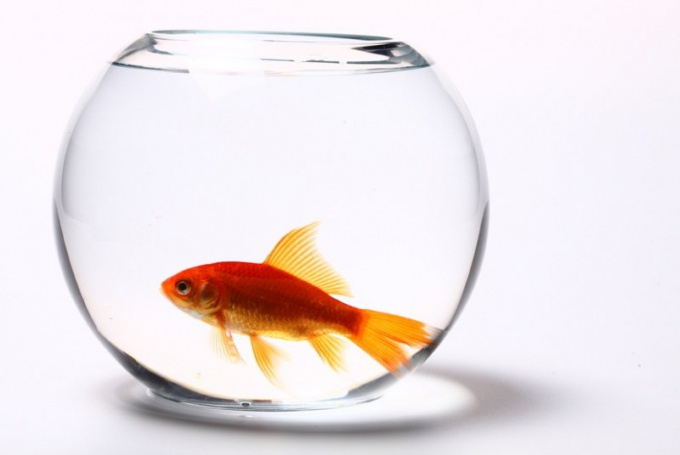 Как дышат рыбы