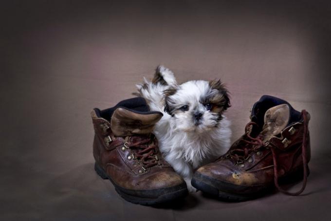 мультики как заботиться о собаках и кошках