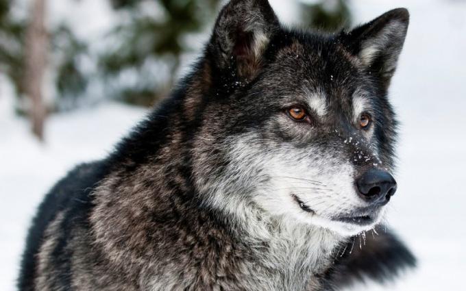 Как животные переносят зиму