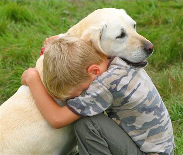 как животные помогают лечить людей