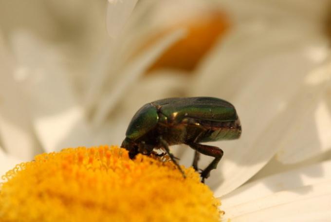 Как дышат насекомые