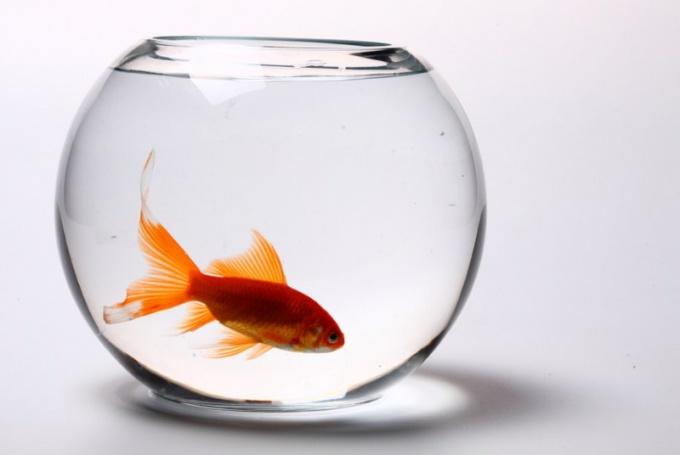 Как живут рыбы