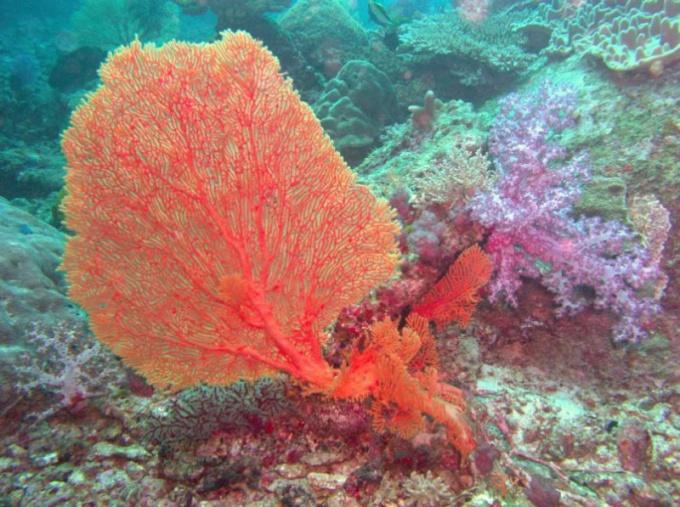 Как выглядят кораллы